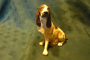 Coalport English Springer Span